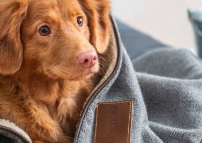 Test and Treat Pets for Mold